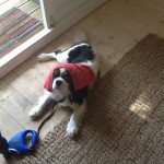 Camp Dog Harvey keeping cool